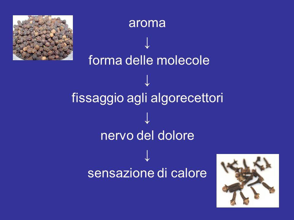 aroma forma delle molecole fissaggio agli algorecettori nervo del dolore sensazione di calore