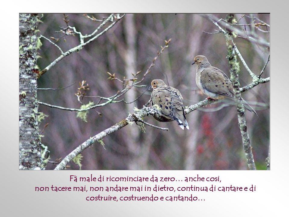 Molto spesso – prima che nascono gli uccellini, un animale, un bambino, una tempesta distrugge una volta di più il nido, ma questa volta con il suo pr