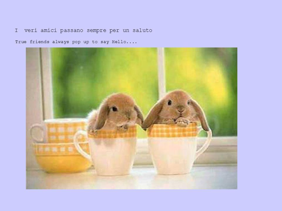 I veri amici passano sempre per un saluto True friends always pop up to say Hello....