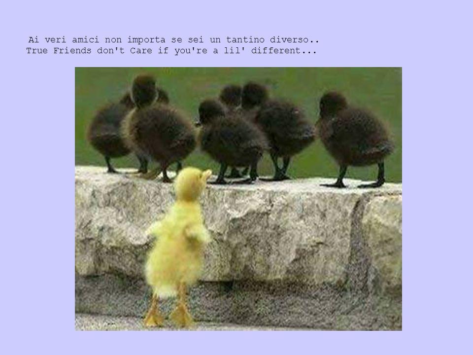 Ai veri amici non importa se sei un tantino diverso.. True Friends don't Care if you're a lil' different...