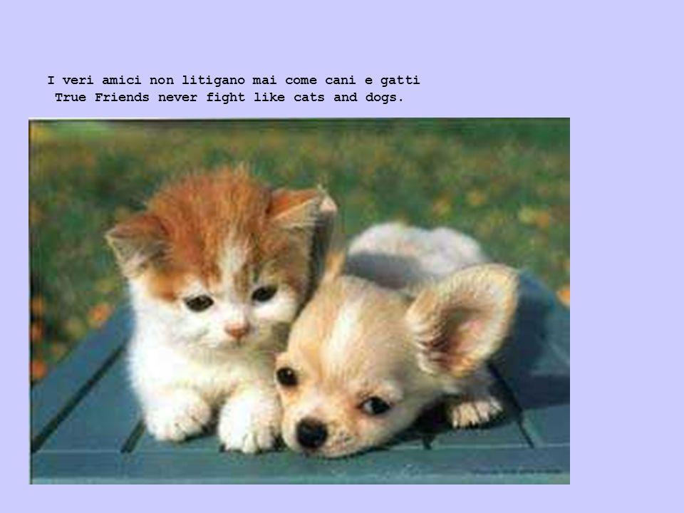 I veri amici non litigano mai come cani e gatti True Friends never fight like cats and dogs.