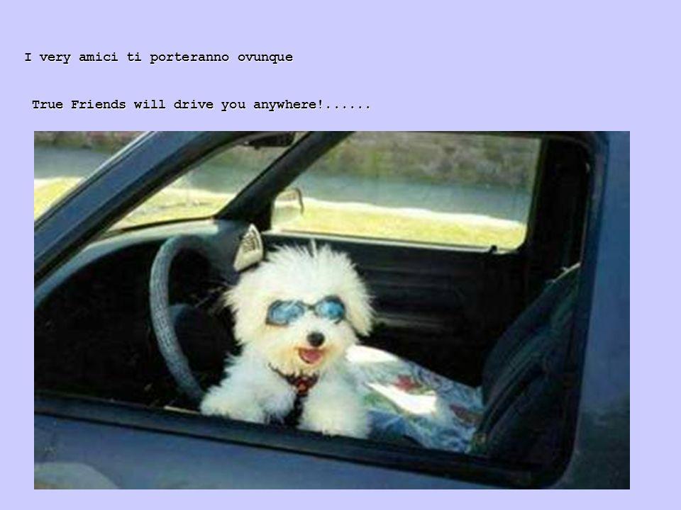 I very amici ti porteranno ovunque True Friends will drive you anywhere!...... True Friends will drive you anywhere!......