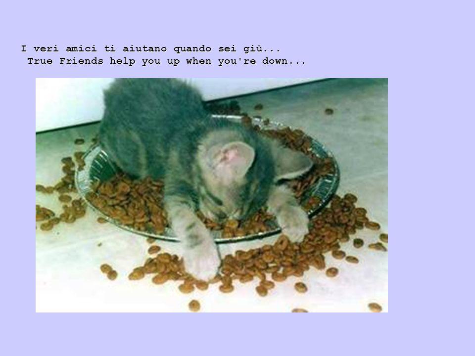 e gli amici veri non ti lasciano mai fare qualcosa di cui potresti pentirti al risveglio, il mattino dopo!.