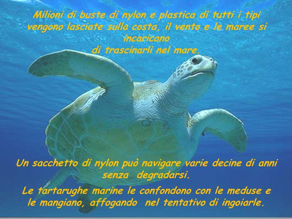 Le tartarughe marine le confondono con le meduse e le mangiano, affogando nel tentativo di ingoiarle.