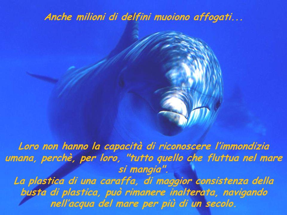 Le tartarughe marine le confondono con le meduse e le mangiano, affogando nel tentativo di ingoiarle. Milioni di buste di nylon e plastica di tutti i