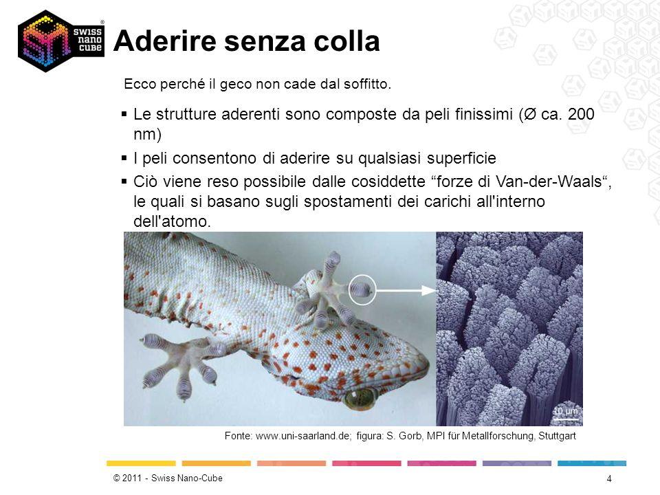 © 2011 - Swiss Nano-Cube Aderire senza colla 4 Ecco perché il geco non cade dal soffitto.