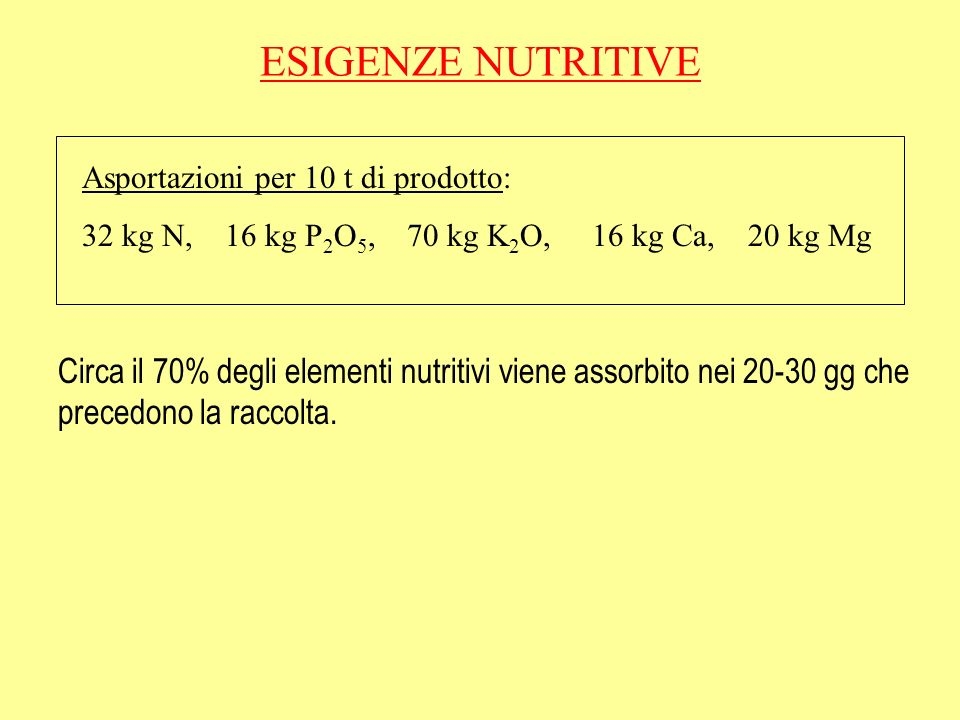 ESIGENZE NUTRITIVE Asportazioni per 10 t di prodotto: 32 kg N, 16 kg P 2 O 5, 70 kg K 2 O, 16 kg Ca, 20 kg Mg Circa il 70% degli elementi nutritivi viene assorbito nei 20-30 gg che precedono la raccolta.