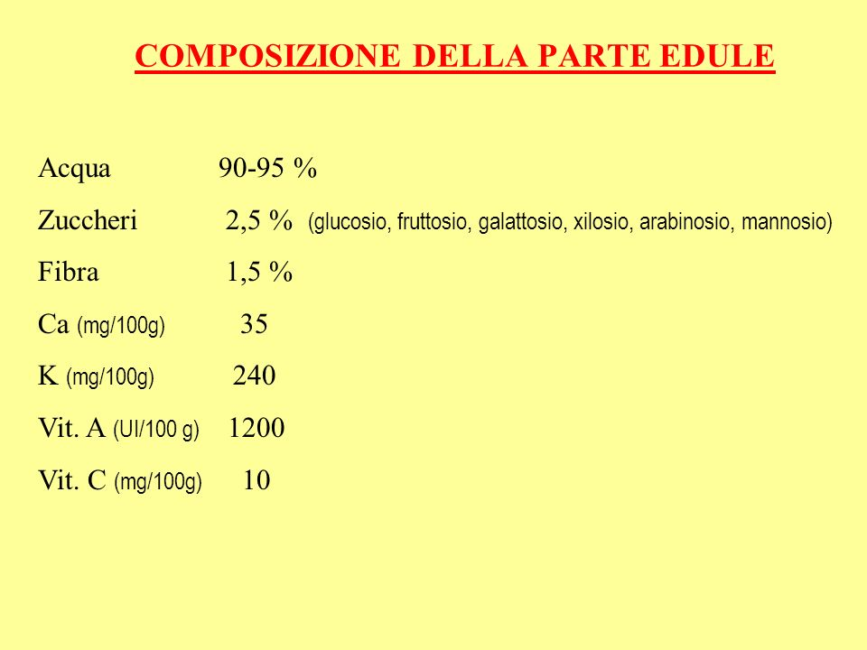 COMPOSIZIONE DELLA PARTE EDULE Acqua 90-95 % Zuccheri 2,5 % (glucosio, fruttosio, galattosio, xilosio, arabinosio, mannosio) Fibra 1,5 % Ca (mg/100g) 35 K (mg/100g) 240 Vit.