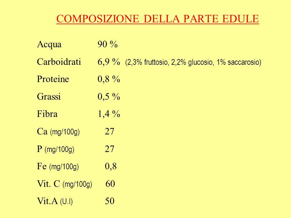 COMPOSIZIONE DELLA PARTE EDULE Acqua 90 % Carboidrati 6,9 % (2,3% fruttosio, 2,2% glucosio, 1% saccarosio) Proteine 0,8 % Grassi 0,5 % Fibra 1,4 % Ca