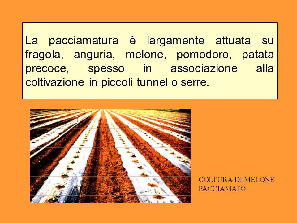 La pacciamatura è largamente attuata su fragola, anguria, melone, pomodoro, patata precoce, spesso in associazione alla coltivazione in piccoli tunnel