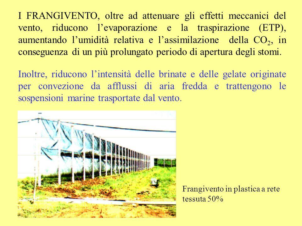 Frangivento in plastica a rete tessuta 50% I FRANGIVENTO, oltre ad attenuare gli effetti meccanici del vento, riducono levaporazione e la traspirazion