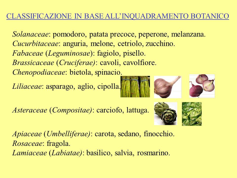 CLASSIFICAZIONE IN BASE ALLINQUADRAMENTO BOTANICO Solanaceae: pomodoro, patata precoce, peperone, melanzana. Cucurbitaceae: anguria, melone, cetriolo,