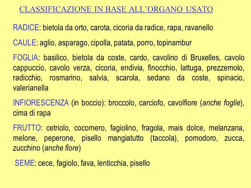 CLASSIFICAZIONE IN BASE ALLORGANO USATO RADICE: bietola da orto, carota, cicoria da radice, rapa, ravanello CAULE: aglio, asparago, cipolla, patata, p