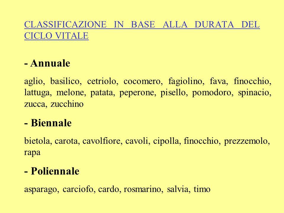 CLASSIFICAZIONE IN BASE ALLA DURATA DEL CICLO VITALE - Annuale aglio, basilico, cetriolo, cocomero, fagiolino, fava, finocchio, lattuga, melone, patat