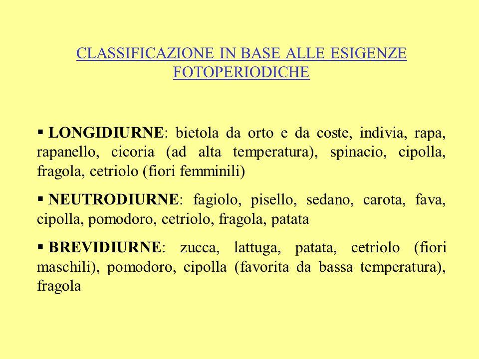 CLASSIFICAZIONE IN BASE ALLE ESIGENZE FOTOPERIODICHE LONGIDIURNE: bietola da orto e da coste, indivia, rapa, rapanello, cicoria (ad alta temperatura),