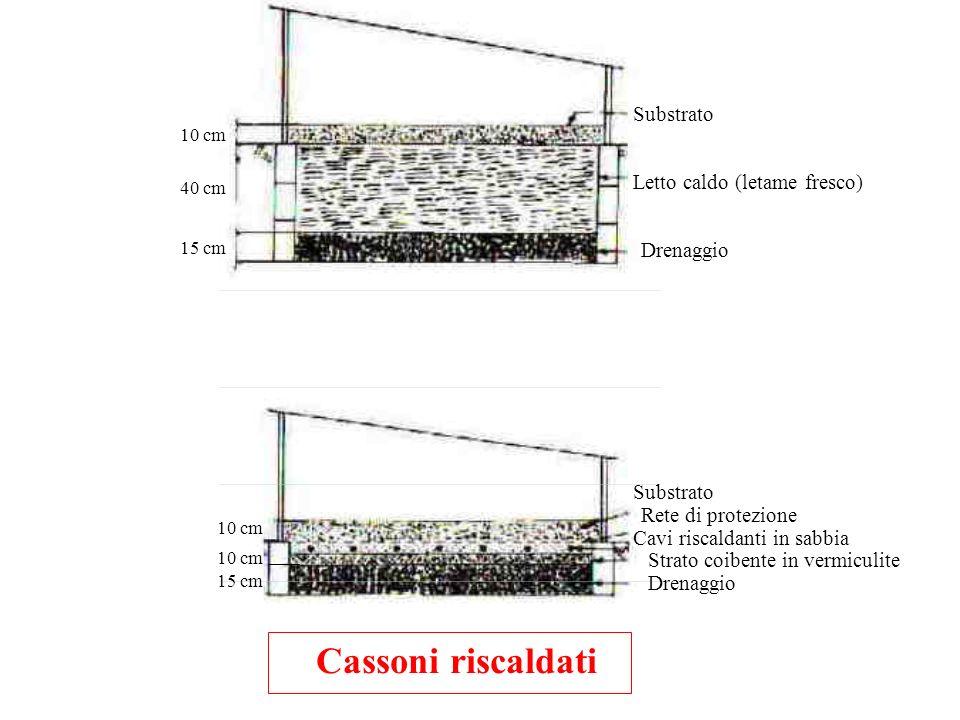 Cassoni riscaldati Substrato Letto caldo (letame fresco) Drenaggio 10 cm 40 cm 15 cm Substrato Rete di protezione Cavi riscaldanti in sabbia Strato co