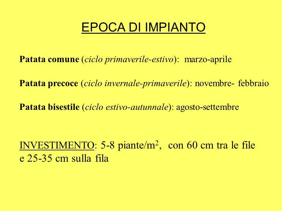 EPOCA DI IMPIANTO Patata comune (ciclo primaverile-estivo): marzo-aprile Patata precoce (ciclo invernale-primaverile): novembre- febbraio Patata bises