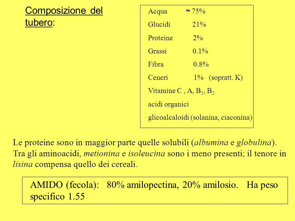 Composizione del tubero: Acqua 75% Glucidi 21% Proteine 2% Grassi 0.1% Fibra 0.8% Ceneri 1% (sopratt. K) Vitamine C, A, B 1, B 2 acidi organici glicoa