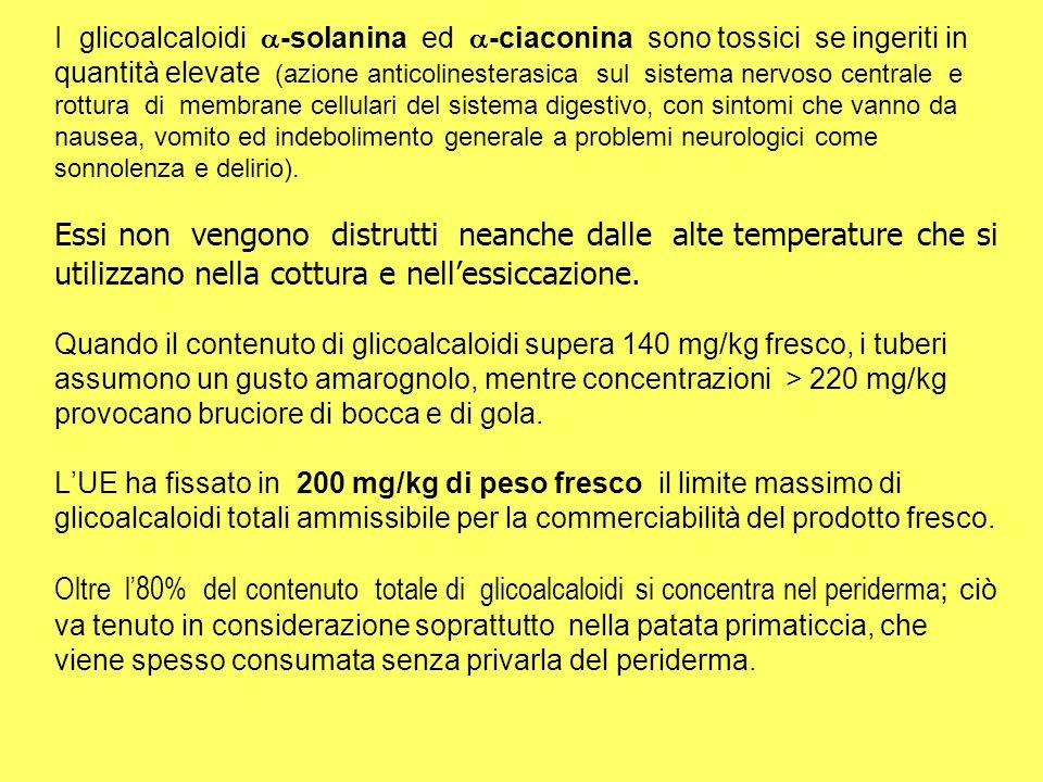 I glicoalcaloidi -solanina ed -ciaconina sono tossici se ingeriti in quantità elevate (azione anticolinesterasica sul sistema nervoso centrale e rottu