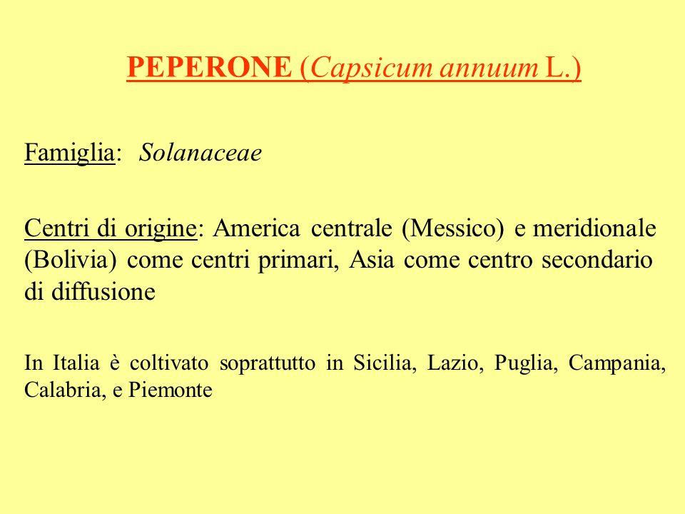PEPERONE (Capsicum annuum L.) Famiglia: Solanaceae Centri di origine: America centrale (Messico) e meridionale (Bolivia) come centri primari, Asia com