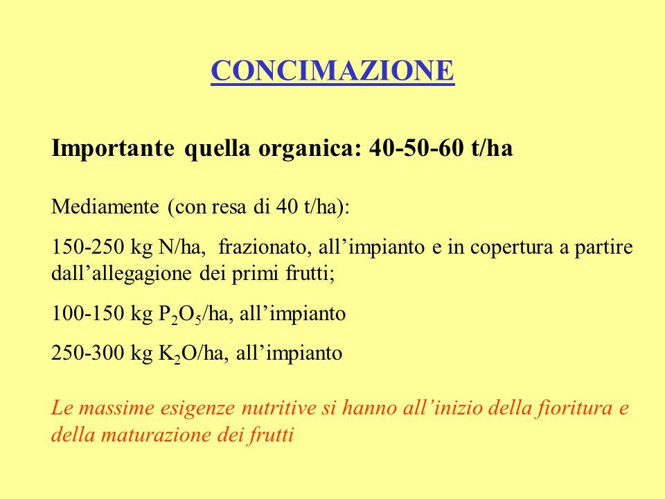 CONCIMAZIONE Importante quella organica: 40-50-60 t/ha Mediamente (con resa di 40 t/ha): 150-250 kg N/ha, frazionato, allimpianto e in copertura a partire dallallegagione dei primi frutti; 100-150 kg P 2 O 5 /ha, allimpianto 250-300 kg K 2 O/ha, allimpianto Le massime esigenze nutritive si hanno allinizio della fioritura e della maturazione dei frutti