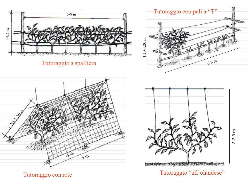 1,5-2 m 6-8 m Tutoraggio a spalliera 1,10-1,20 m 6-8 m Tutoraggio con pali a T 1,20-1,30 m 5 m Tutoraggio con rete 2-2,5 m Tutoraggio allolandese