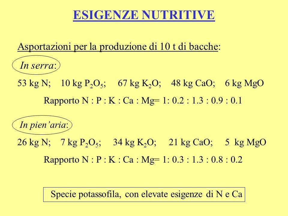 ESIGENZE NUTRITIVE Asportazioni per la produzione di 10 t di bacche: In serra: 53 kg N; 10 kg P 2 O 5 ; 67 kg K 2 O; 48 kg CaO; 6 kg MgO Rapporto N :
