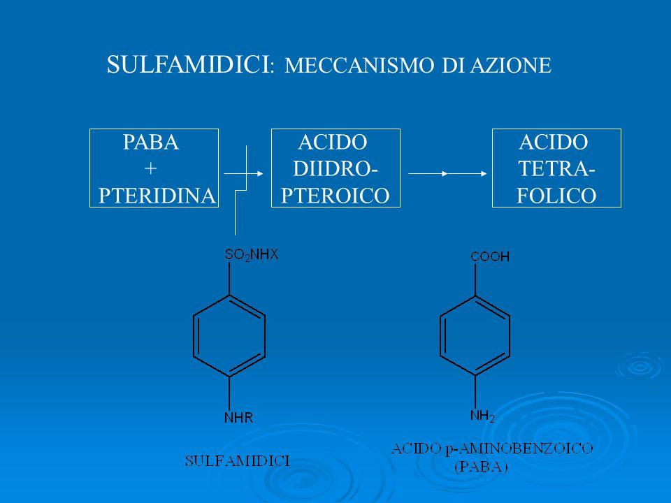 SULFAMIDICI : MECCANISMO DI AZIONE PABA + PTERIDINA ACIDO DIIDRO- PTEROICO ACIDO TETRA- FOLICO