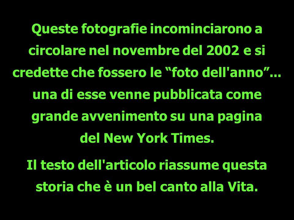 Queste fotografie incominciarono a circolare nel novembre del 2002 e si credette che fossero le foto dell'anno... una di esse venne pubblicata come gr