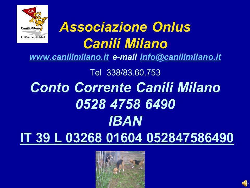 Associazione Onlus Canili Milano www.canilimilano.it e-mail info@canilimilano.it Tel 338/83.60.753 Conto Corrente Canili Milano 0528 4758 6490 IBAN IT