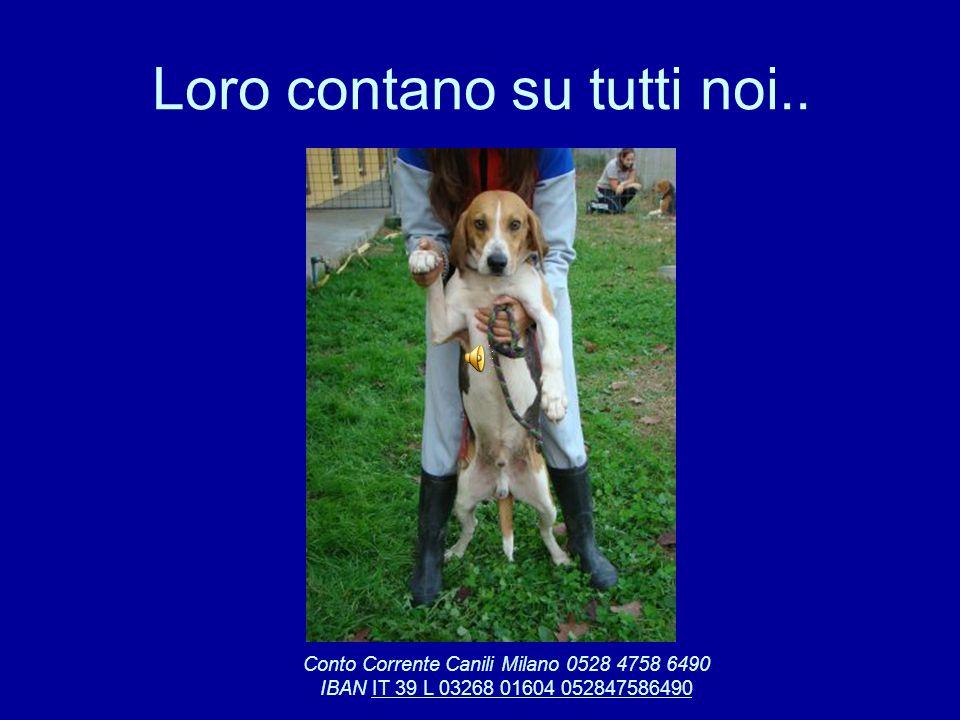 Loro contano su tutti noi.. Conto Corrente Canili Milano 0528 4758 6490 IBAN IT 39 L 03268 01604 052847586490