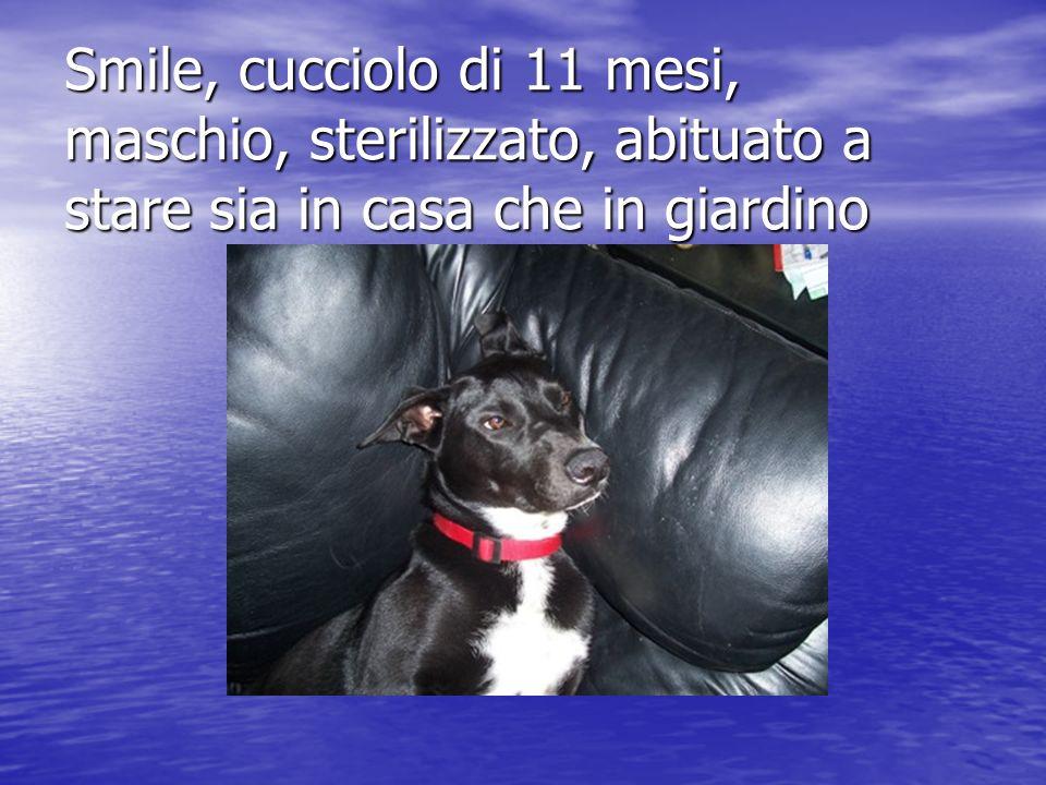 Arrivato circa un anno fa dalla sicilia, era un piccolo cucciolo, appena arrivato a Milano si è tagliato una zampina..
