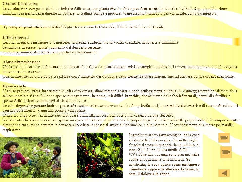 Che cos' è la cocaina La cocaina è un composto chimico derivato dalla coca, una pianta che si coltiva prevalentemente in America del Sud. Dopo la raff
