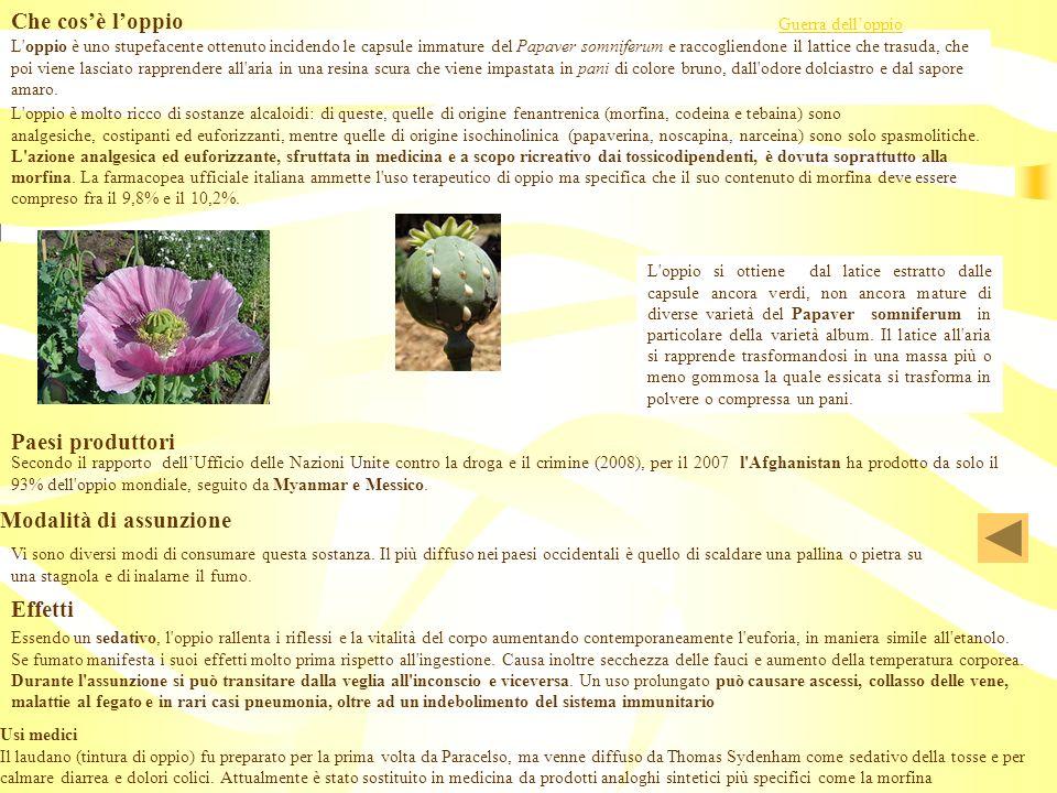 L'oppio è uno stupefacente ottenuto incidendo le capsule immature del Papaver somniferum e raccogliendone il lattice che trasuda, che poi viene lascia
