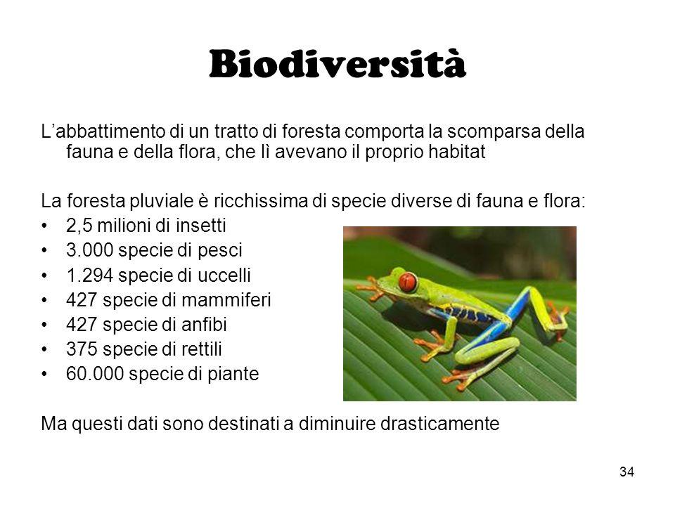 34 Biodiversità Labbattimento di un tratto di foresta comporta la scomparsa della fauna e della flora, che lì avevano il proprio habitat La foresta pl