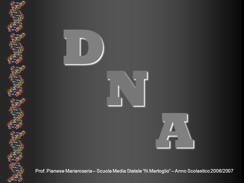 Prof. Pianese Mariarosaria – Scuola Media Statale N.Martoglio – Anno Scolastico 2006/2007 D N A