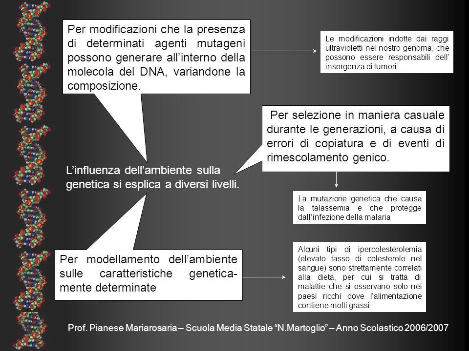 Prof. Pianese Mariarosaria – Scuola Media Statale N.Martoglio – Anno Scolastico 2006/2007 Linfluenza dellambiente sulla genetica si esplica a diversi