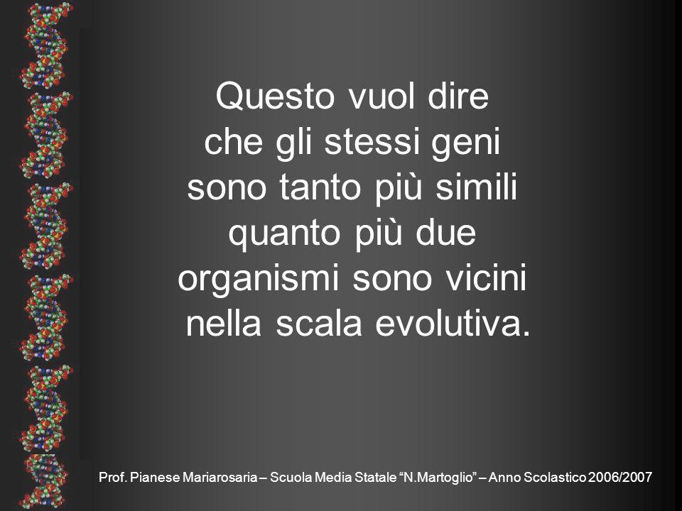 Prof. Pianese Mariarosaria – Scuola Media Statale N.Martoglio – Anno Scolastico 2006/2007 Nel lontano 1949 Chargaff notò come le regole di distribuzio