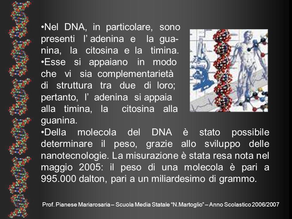 Prof. Pianese Mariarosaria – Scuola Media Statale N.Martoglio – Anno Scolastico 2006/2007 Nel DNA, in particolare, sono presenti l adenina e la gua- n