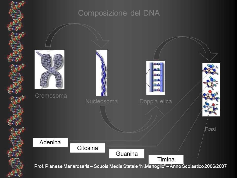 Prof. Pianese Mariarosaria – Scuola Media Statale N.Martoglio – Anno Scolastico 2006/2007 Cromosoma NucleosomaDoppia elica Basi Composizione del DNA A