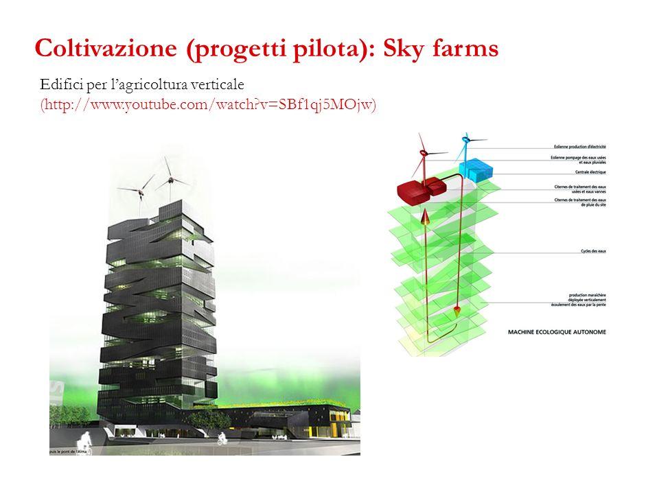 Edifici per lagricoltura verticale (http://www.youtube.com/watch?v=SBf1qj5MOjw) Coltivazione (progetti pilota): Sky farms