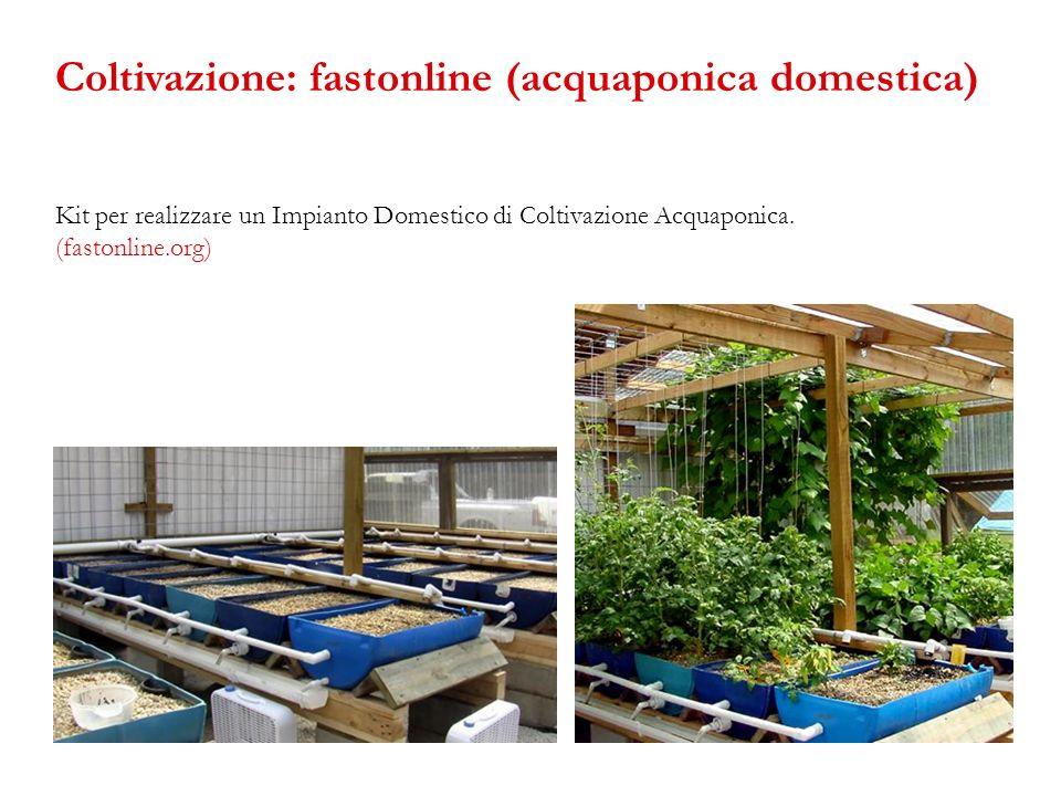 Kit per realizzare un Impianto Domestico di Coltivazione Acquaponica. (fastonline.org) Coltivazione: fastonline (acquaponica domestica)
