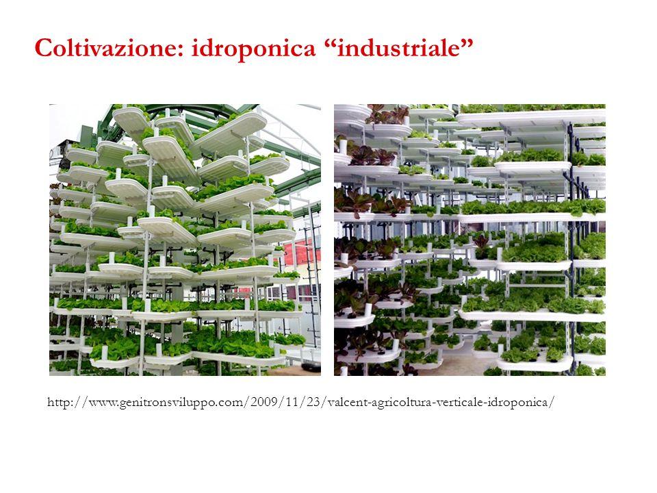 http://www.genitronsviluppo.com/2009/11/23/valcent-agricoltura-verticale-idroponica/ Coltivazione: idroponica industriale