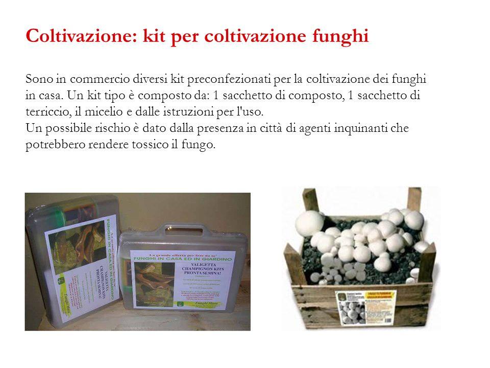 Sono in commercio diversi kit preconfezionati per la coltivazione dei funghi in casa. Un kit tipo è composto da: 1 sacchetto di composto, 1 sacchetto
