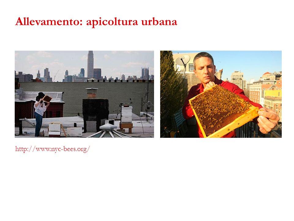 http://www.nyc-bees.org/ Allevamento: apicoltura urbana