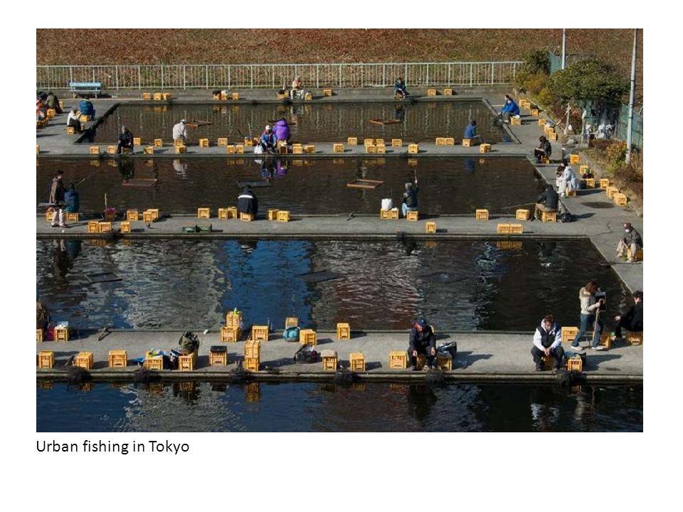 Urban fishing in Tokyo