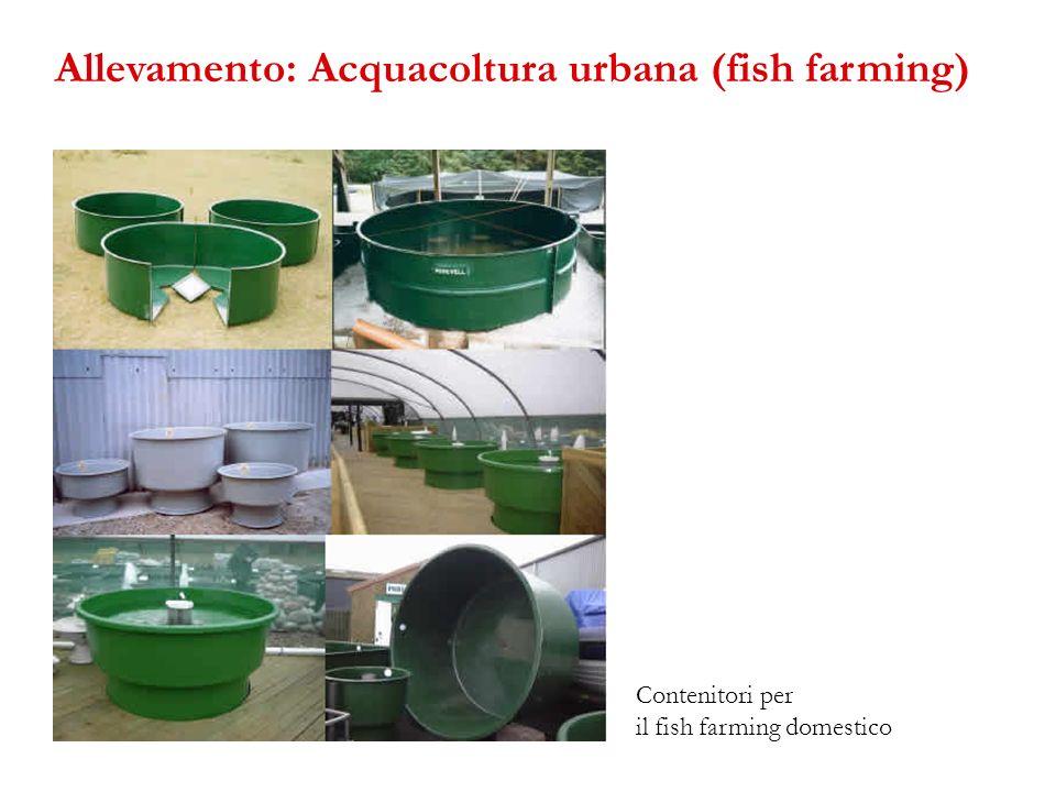 Contenitori per il fish farming domestico Allevamento: Acquacoltura urbana (fish farming)