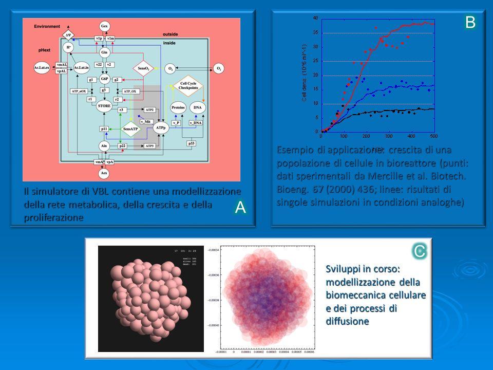 Il simulatore di VBL contiene una modellizzazione della rete metabolica, della crescita e della proliferazione Esempio di applicazione: crescita di una popolazione di cellule in bioreattore (punti: dati sperimentali da Mercille et al.