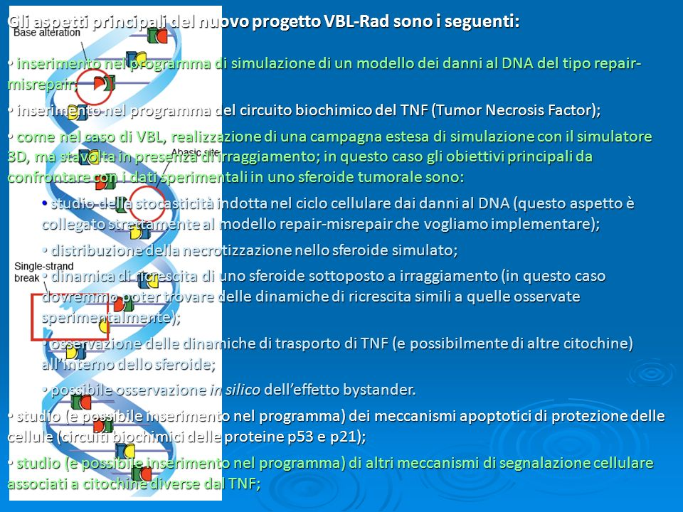 Gli aspetti principali del nuovo progetto VBL-Rad sono i seguenti: inserimento nel programma di simulazione di un modello dei danni al DNA del tipo repair- misrepair; inserimento nel programma di simulazione di un modello dei danni al DNA del tipo repair- misrepair; inserimento nel programma del circuito biochimico del TNF (Tumor Necrosis Factor); inserimento nel programma del circuito biochimico del TNF (Tumor Necrosis Factor); come nel caso di VBL, realizzazione di una campagna estesa di simulazione con il simulatore 3D, ma stavolta in presenza di irraggiamento; in questo caso gli obiettivi principali da confrontare con i dati sperimentali in uno sferoide tumorale sono: come nel caso di VBL, realizzazione di una campagna estesa di simulazione con il simulatore 3D, ma stavolta in presenza di irraggiamento; in questo caso gli obiettivi principali da confrontare con i dati sperimentali in uno sferoide tumorale sono: studio della stocasticità indotta nel ciclo cellulare dai danni al DNA (questo aspetto è collegato strettamente al modello repair-misrepair che vogliamo implementare); studio della stocasticità indotta nel ciclo cellulare dai danni al DNA (questo aspetto è collegato strettamente al modello repair-misrepair che vogliamo implementare); distribuzione della necrotizzazione nello sferoide simulato; distribuzione della necrotizzazione nello sferoide simulato; dinamica di ricrescita di uno sferoide sottoposto a irraggiamento (in questo caso dovremmo poter trovare delle dinamiche di ricrescita simili a quelle osservate sperimentalmente); dinamica di ricrescita di uno sferoide sottoposto a irraggiamento (in questo caso dovremmo poter trovare delle dinamiche di ricrescita simili a quelle osservate sperimentalmente); osservazione delle dinamiche di trasporto di TNF (e possibilmente di altre citochine) allinterno dello sferoide; osservazione delle dinamiche di trasporto di TNF (e possibilmente di altre citochine) allinterno dello sferoide; possibile osservazione in s