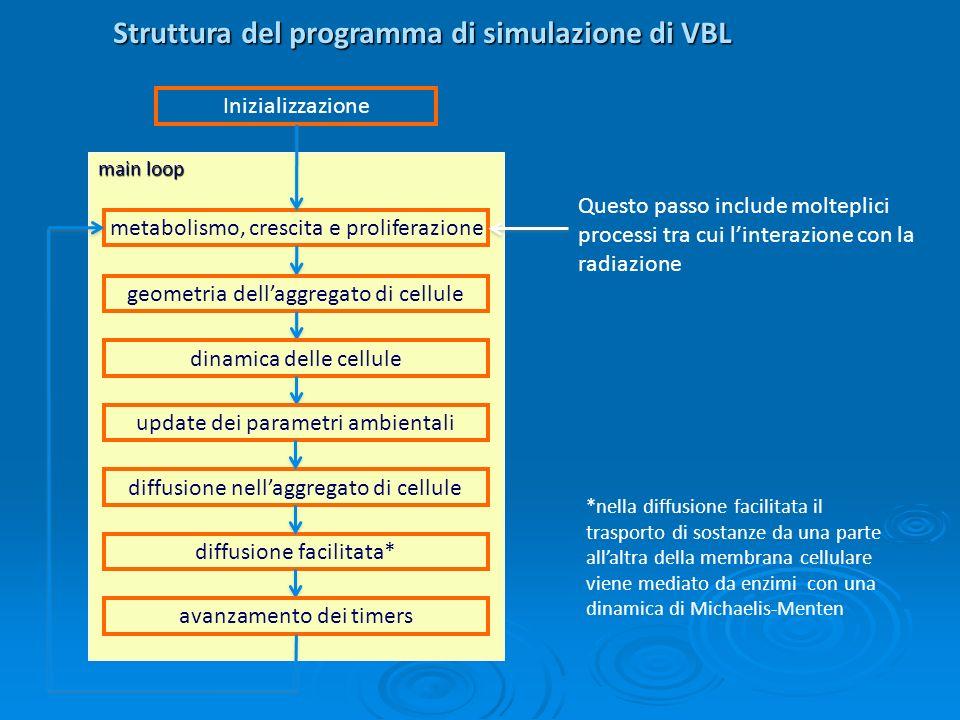 Struttura del programma di simulazione di VBL-Rad diffusione nellaggregato di cellule Questo passo include molteplici processi tra cui linterazione con la radiazione.